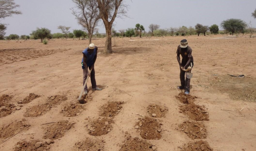 Cover Photo: Sahel Eco, June 2016. Farmers in Dianweli village, Konna Commune, plant millet using the zaï technique, which involves constructing pits to capture water and condense compost.