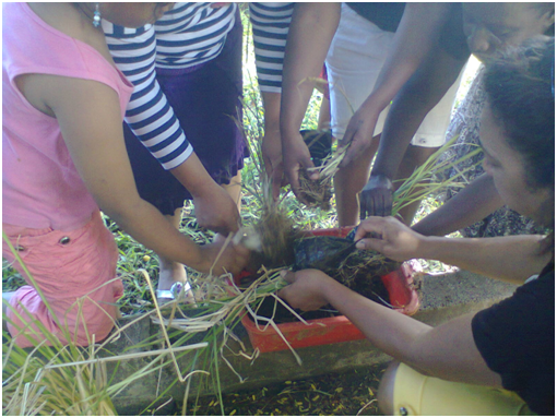plantation of vetiver by the women beneficiaries - climate adaptation.