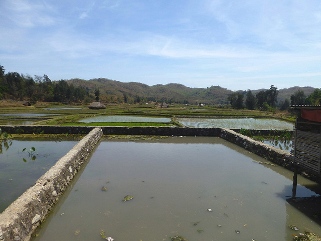 Fish pond and rice paddy fields in Aileu, Timor-Leste. Photo by Jharendu Pant, 2012.