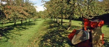4eb54b3699ce8somerset-20traditional-20cider-20orchard - climate adaptation.