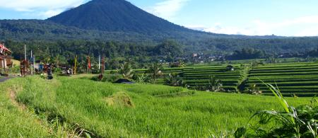 53982736c6f1cbali-scenes-ricefields-02-24-14-147 - climate adaptation.